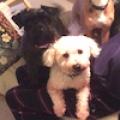 Oscar & Missy (Reserved)