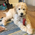 Milo Doodle (RESERVED)
