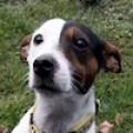 Tinker(Reserved)